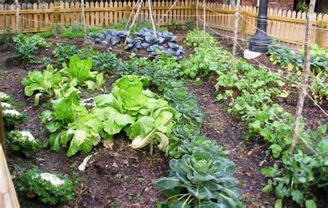 home gardening  beginners