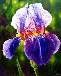 color iris 25 best ideas about iris flowers on iris