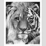 Half Lion Half Tiger Art | 400 x 491 jpeg 55kB