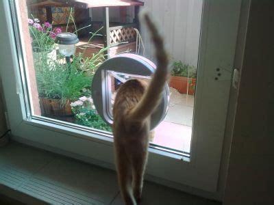 porta per gatti porta basculante per gatto cat mate 210 animalmarketonline