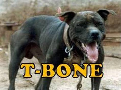 t bone dogs t bone s club t bone history dedicated to dogs