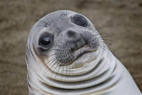 Orcas hunting seal : woahdude