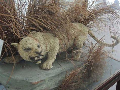 imagenes de animales extinguidos estos son los 120 animales que han desaparecido en los