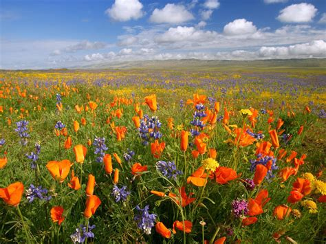 field of flowers pictures free the of the jungle in software evolution sapm course