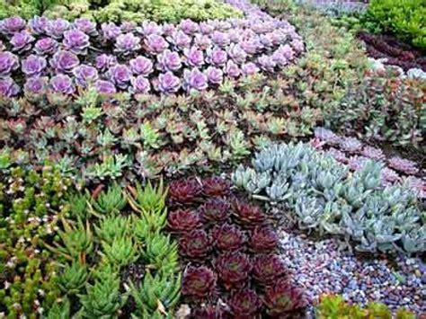 Succulents Garden Ideas Succulent Landscaping Designing A Succulent Garden Ground
