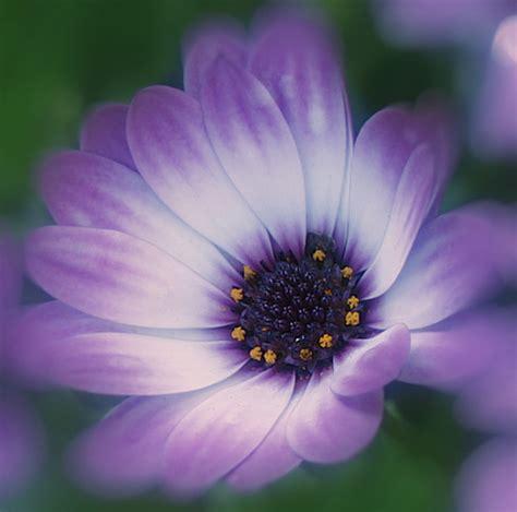 imagenes flores impresionantes 14 fotos de flores impresionantes para recibir la primavera