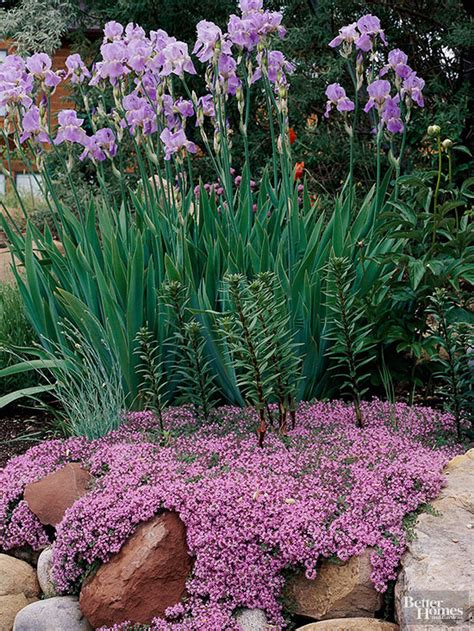 plants for a rock garden best plants for rock gardens