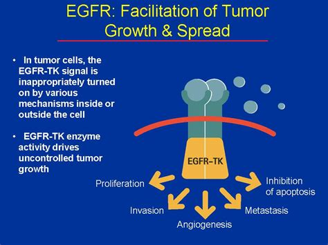 egfr inhibitors compare egfr inhibitors egfr therapy grace lung cancer part 4