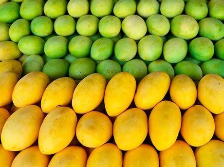 siege mango uphill battle for philippine mango exporters