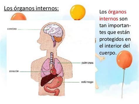 imagenes reales de organos del cuerpo humano el cuerpo humano conocimiento del medio primaria
