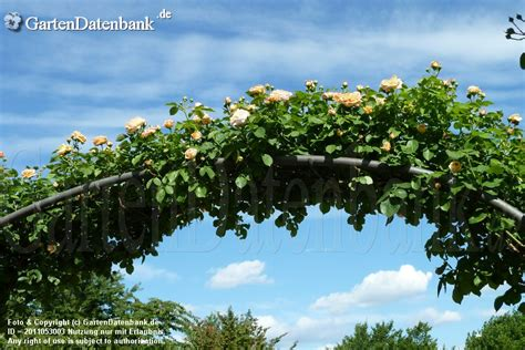Britzer Garten Juni by Britzer Garten Im Sommer