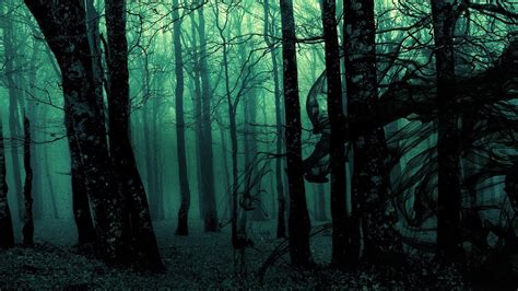 fog forest hd dark aesthetic wallpapers hd wallpapers