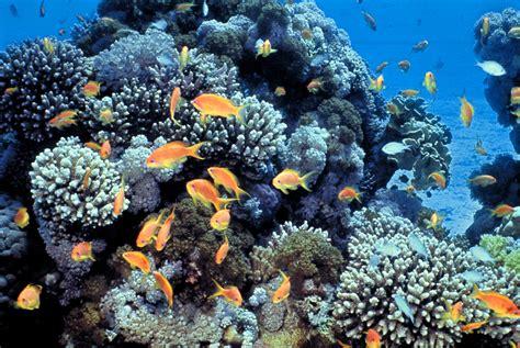 file gulf of eilat sea coral reefs jpg wikimedia commons