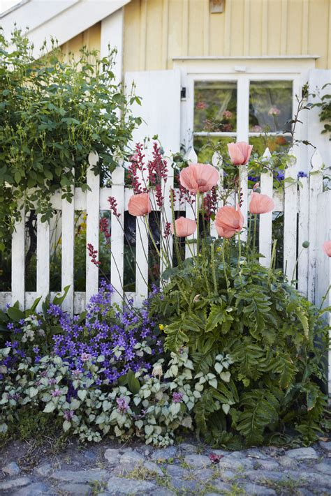 home gardening advice   create  beautiful yard
