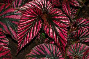 Colourful Foliage Plants - image gallery indoor plants colorful foliage