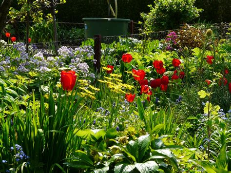Garten Pflanzen Mai by Ziergarten Arbeiten Im Mai Freude Am Garten
