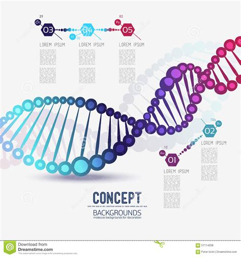 dna colors color molecules on white vector cartoondealer