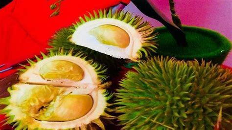 makan durian sepuasnya cukup bayar rp  ribu