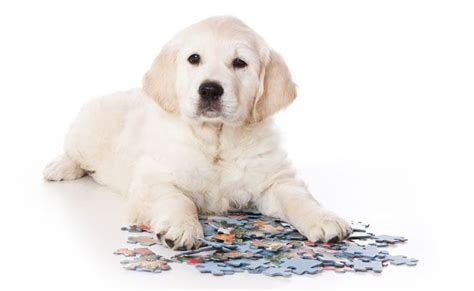 games to play with your dog in the house 10 brain games to play with your dog mnn mother nature network