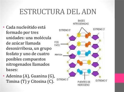 numero de cadenas del adn estructura y funcion del adn