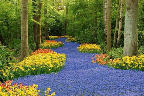 Amsterdam Flower Garden World S Largest Flower Garden Keukenhof Netherlands Xcitefun Net