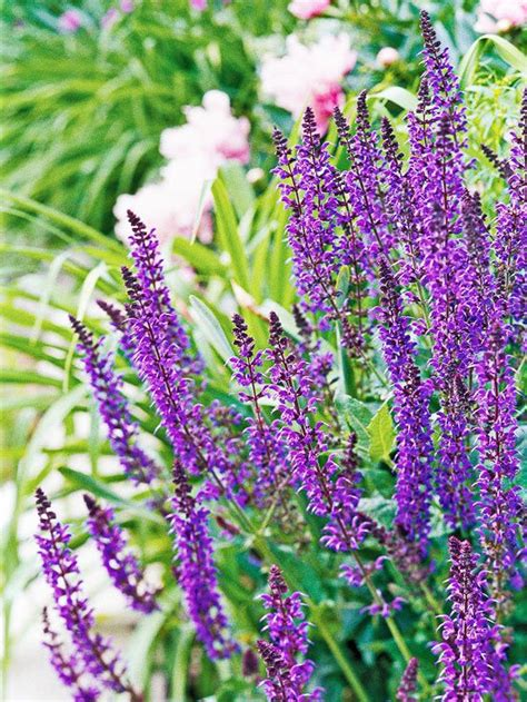 Purple Garden Flower 205 Best Plant Identification Images On Shadow Plants Flowers Garden And Landscaping