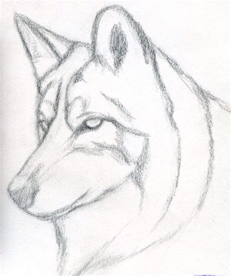 Sketches Wolf by Simple Wolf Sketch Wolf Drawings Wolf