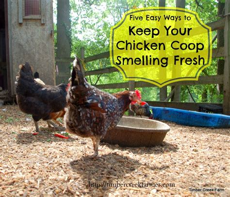 Animal Farm Keeps Desktop Clean by Keep Your Chicken Coop Smelling Fresh Timber Creek Farm