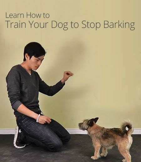 how to stop dog barking when left alone way to train a dog