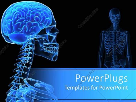 powerpoint templates free bones powerpoint template x ray of the human head showing on