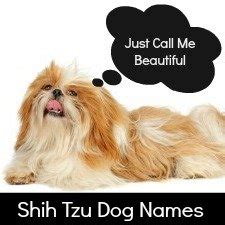 most popular shih tzu names shih tzu puppy weight chart puppy growth chart
