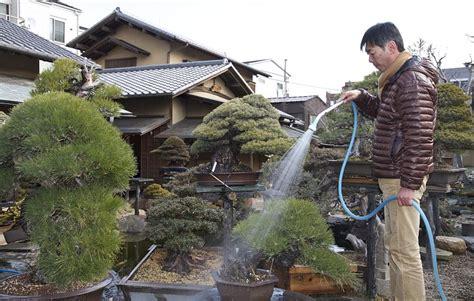gigi busuk bisa bikin mati senyum itu sehat 5 cara mudah merawat tanaman bonsai dengan baik satu jam