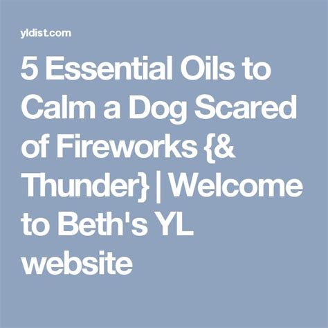 essential oils to calm dogs best 25 scared of fireworks ideas on
