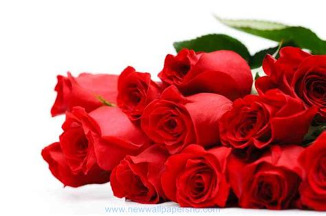 valentines for day flowers hd images photos pics hd walls