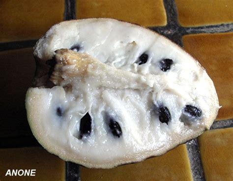 fruit l anone fruits exotique quot l anone