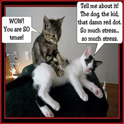 Funny Massage Memes - cat massage pictures photos and images for facebook