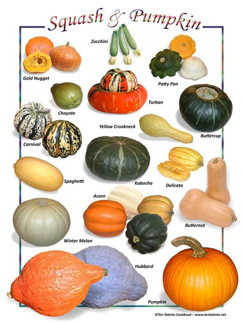 pumpkin names 43 best images about vegetables and fruit list names on