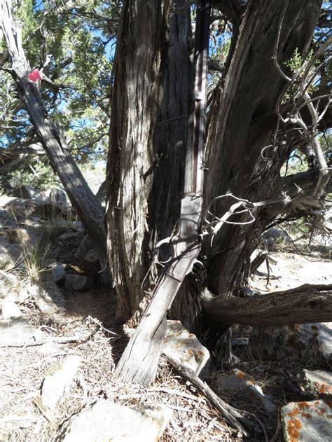 Found Find 132 Year Rifle Found In Nevada Desert The About Guns