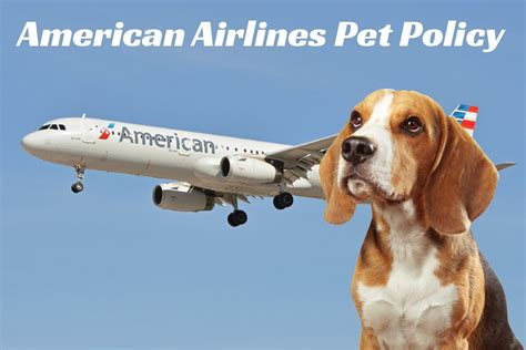United Airlines In Cabin Pet Policy by Flying With Your Pet American Airlines Pet Policy Certapet