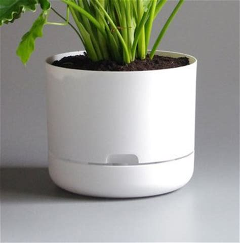 White Plant Pot Kentia Palm In Mr Kitly White Plant Pot Plantandpot Nz