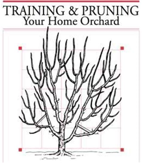 trimming fruit trees in winter pruning your home orchard garden pruning