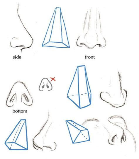 illustrator nose tutorial 1000 ideas about nose drawing on pinterest drawing