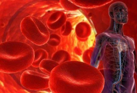 imagenes que lloran sangre explicacion 191 por qu 233 circula la sangre por todo el cuerpo porque es