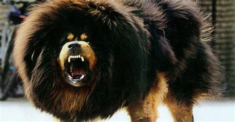 Most Expensive In The World by World S 10 Most Expensive Breeds Trending Posts