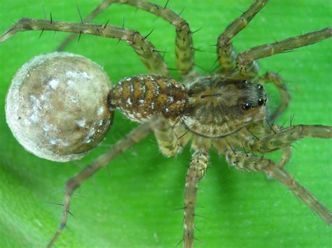 eclipsed turns out that spider does a afterall books quot dinner s on me quot he says spiderhugger