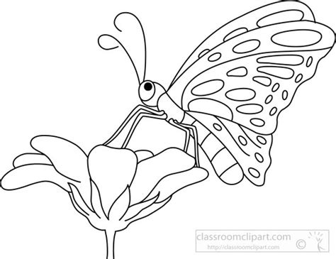 Outline Of Flowers And Butterflies by Animals Butterfly Black White Outline 5721 Classroom Clipart