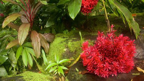 Hawaii Tropical Botanical Garden Pictures View Photos Tropical Garden Flowers