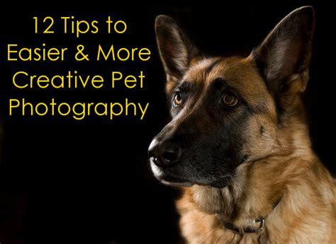pet and photography for everybody secrets from a pro books pet photography archives