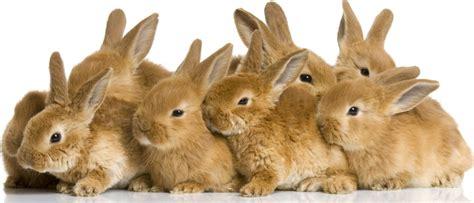 like a bunny rabbits
