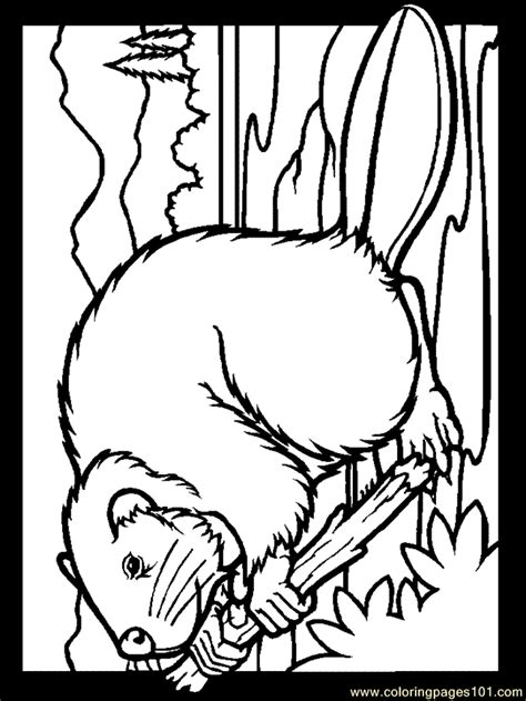 beaver color coloring pages color beaver mammals gt beaver free
